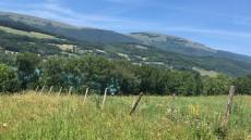 Lac-petitchet-montagne-verdure
